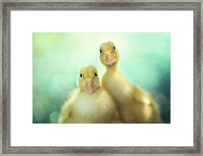 Edgar Loves Sally Framed Print by Amy Tyler