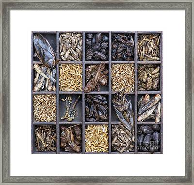 Edible Insects Framed Print by Tim Gainey