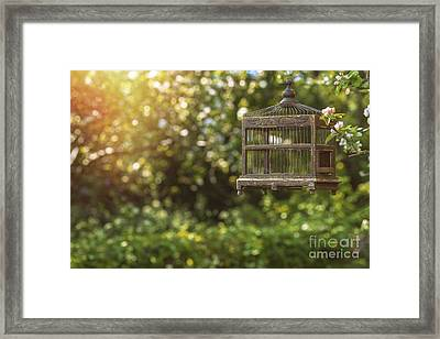 Edwardian Birdcage Framed Print by Amanda And Christopher Elwell