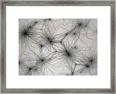 Eengora Framed Print by Elaine Oehmich