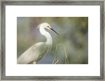 Egret In The Morning Light  Framed Print by Saija Lehtonen
