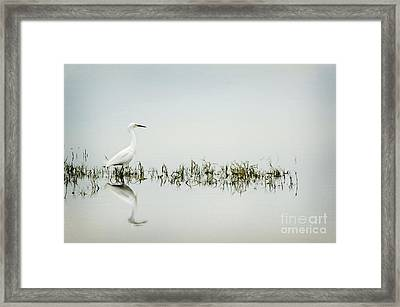 Egret Framed Print by Jim  Calarese