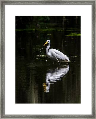 Egret Refelction Framed Print by Alicia Collins