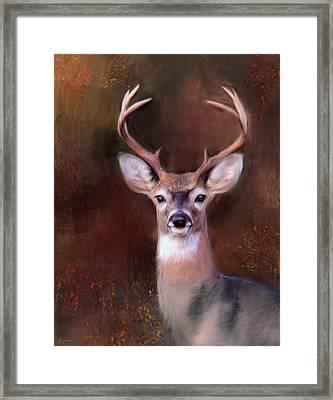 Eight Point In Autumn Framed Print by Jai Johnson
