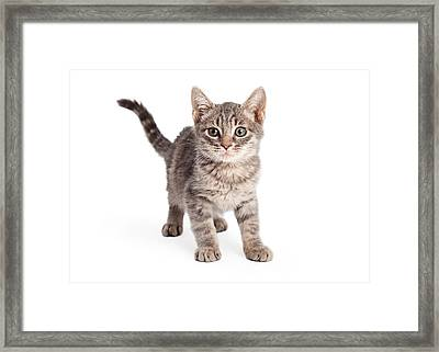 Eight Week Old Playful Tabby Kitten Framed Print by Susan Schmitz