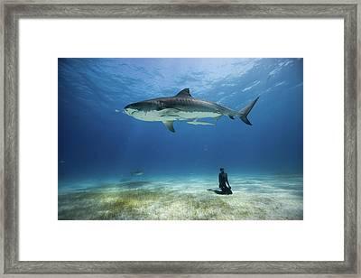 El Tigre Framed Print by One ocean One breath