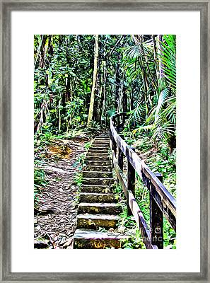El Yunque Stairway Framed Print by Carey Chen