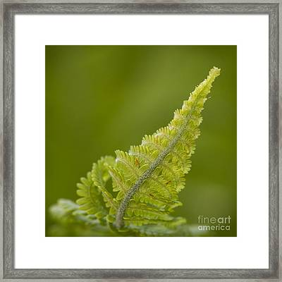 Elegant Fern. Framed Print by Clare Bambers