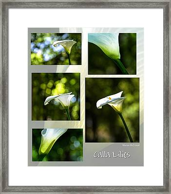 Elegant Translucent Lilies Framed Print by Marion McCristall