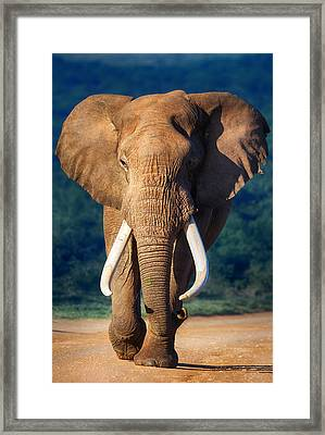 Elephant Approaching Framed Print by Johan Swanepoel