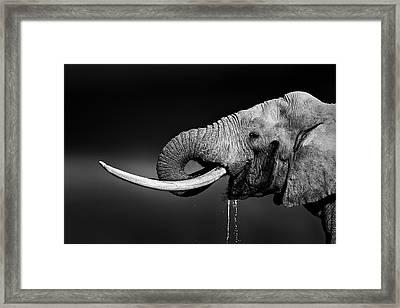 Elephant Bull Drinking Water Framed Print by Johan Swanepoel