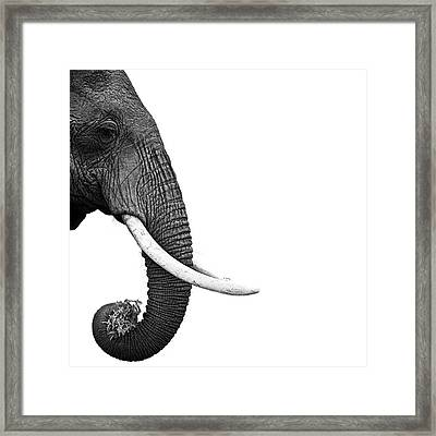 Elephant Framed Print by Daniel Pupius