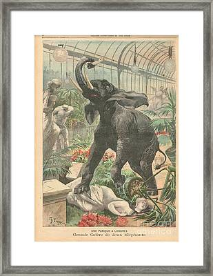 Elephant Rampage Crystal Palace London 1900 Framed Print by David Carton