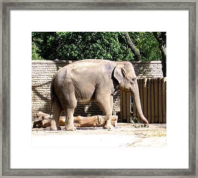 Elephant Framed Print by Rose Santuci-Sofranko
