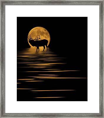 Elk In The Moonlight Framed Print by Shane Bechler