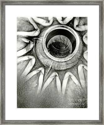 Em15 Framed Print by Mark Stankiewicz