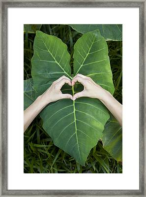 Emerald Heart Framed Print by Sun Gallery Photography Lewis Carlyle