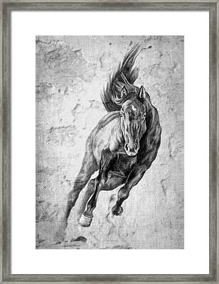 Emergence Galloping Black Horse Framed Print by Renee Forth-Fukumoto
