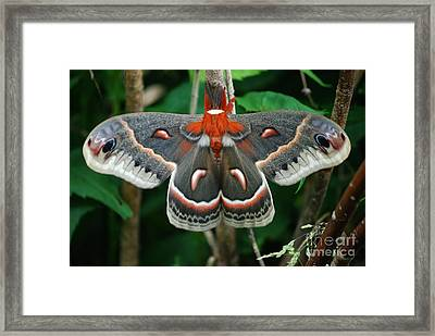 Emergence Framed Print by Randy Bodkins