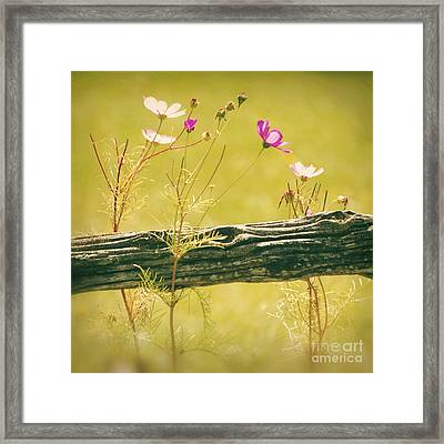 Emerging Beauties - Y11a Framed Print by Variance Collections