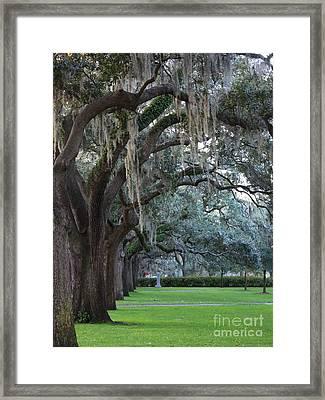 Emmet Park In Savannah Framed Print by Carol Groenen