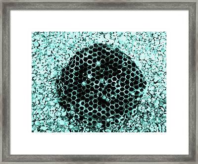 Empty Nest Framed Print by Ross Odom