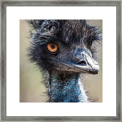Emu Eyes Framed Print by Paul Freidlund