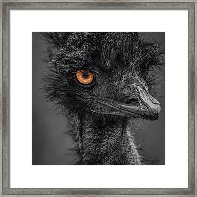 Emu Framed Print by Paul Freidlund