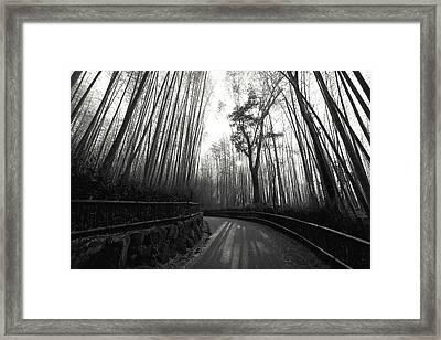 Enchanted Forest Framed Print by Daniel Hagerman