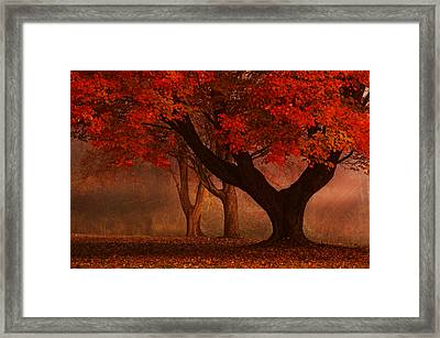 Enchanted Forest Framed Print by Ken Smith