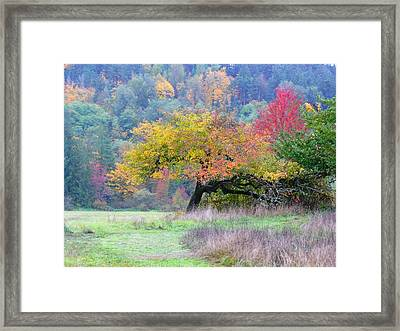 Enchanted Park Framed Print by Lori Seaman