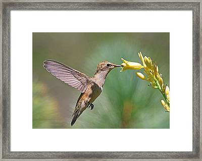 Enchanting Moment Framed Print by Donna Kennedy