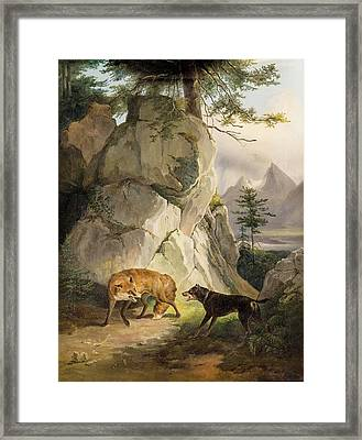 Encounter Of Fox And Dog In Rocky Landscape Framed Print by MotionAge Designs