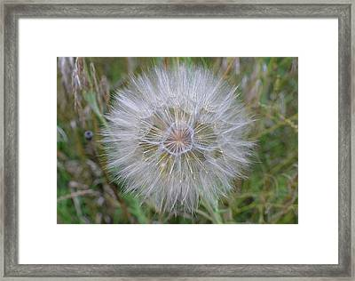 End Of Summer Beauty Framed Print by Nicole Frederick