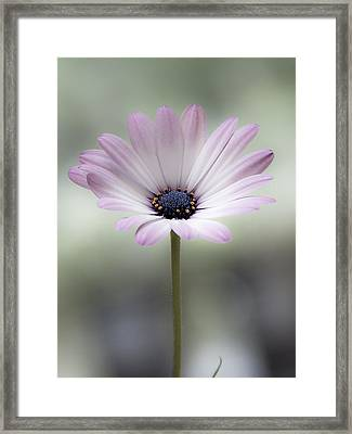 End Of Summer Sweetness Framed Print by Marion McCristall