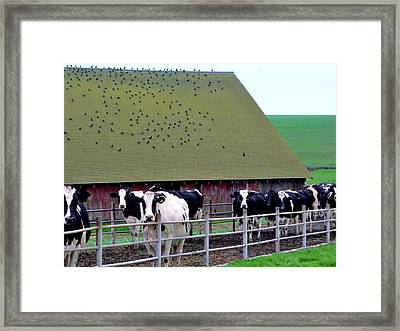 End Of The Day Framed Print by Francine Gourguechon