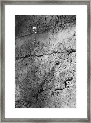 Endure Framed Print by Nicholas Miller