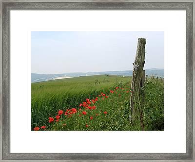 England Sussex Poppy Field Framed Print by Yvonne Ayoub