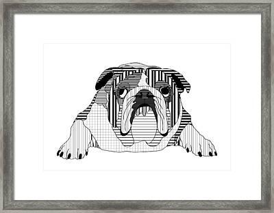 English Bulldog - Line And Graph Art Framed Print by Shara Lee