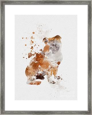 English Bulldog Framed Print by Rebecca Jenkins