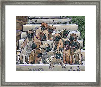 English Mastiff Puppies Framed Print by Nadi Spencer