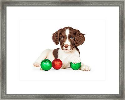 English Springer Spaniel Puppy With Christmas Baubles Framed Print by Susan Schmitz