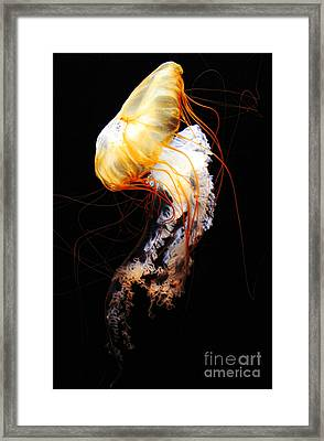 Enigma Framed Print by Andrew Paranavitana