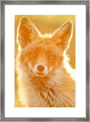 Enlightened Fox Framed Print by Roeselien Raimond