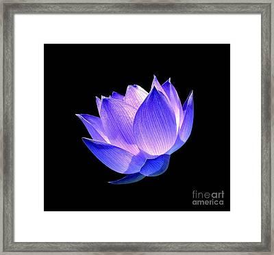 Enlightened Framed Print by Jacky Gerritsen