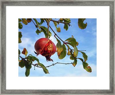 Enlightened Framed Print by Skip Hunt