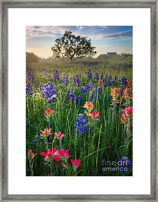 Ennis Morning Framed Print by Inge Johnsson