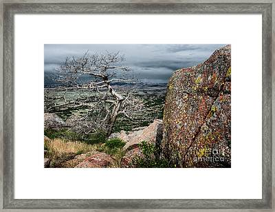 Entangled Tree On Mt. Scott Framed Print by Tamyra Ayles
