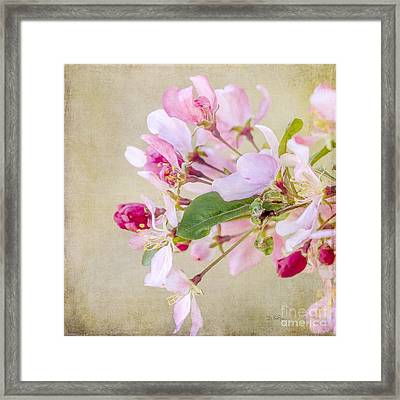Enticement Framed Print by Betty LaRue