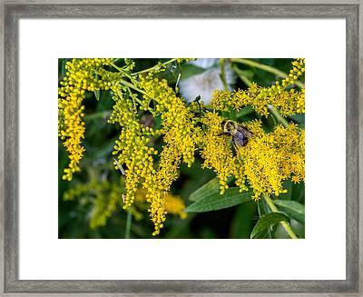 Enticing Yellow 2 Framed Print by Steve Harrington